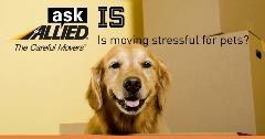Ask Allied: Is moving stressful for your pets?